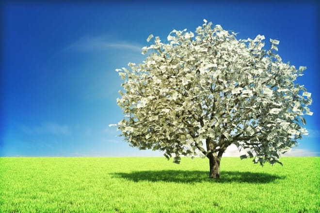 We've seen it fuller but there is still nothing more majestic than the Neal's Picks Money Tree.